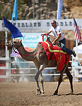 Rich Martin races in the 54th International Camel Races in Virginia City, Nev., on Friday, Sept. 6, 2013.  <br /> Photo by Cathleen Allison
