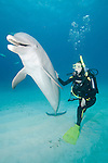 Grand Bahama Island, The Bahamas; a Common Bottlenose Dolphin (Tursiops truncatus) poses for pictures with it's mouth open and allows itself to be rubbed by a scuba diver kneeling in the sand underwater