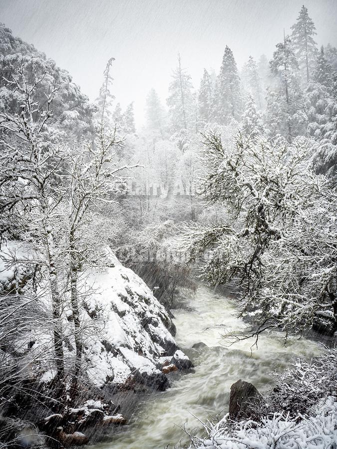 1902-Amador County Snow