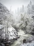 Narrows of Sutter Creek in a snow storm near Volcano, Calif.