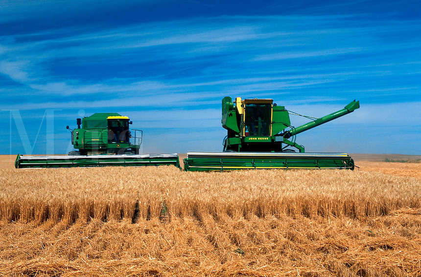Combines harvesting wheat in Colorado.