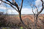 Ile Kangourou au sud d'Adelaide..30 % de la superficie de l'ile a brulé pendant l'automne 2007.
