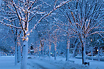 Fresh snow on Commonwealth Avenue, Back Bay, Boston, MA, USA