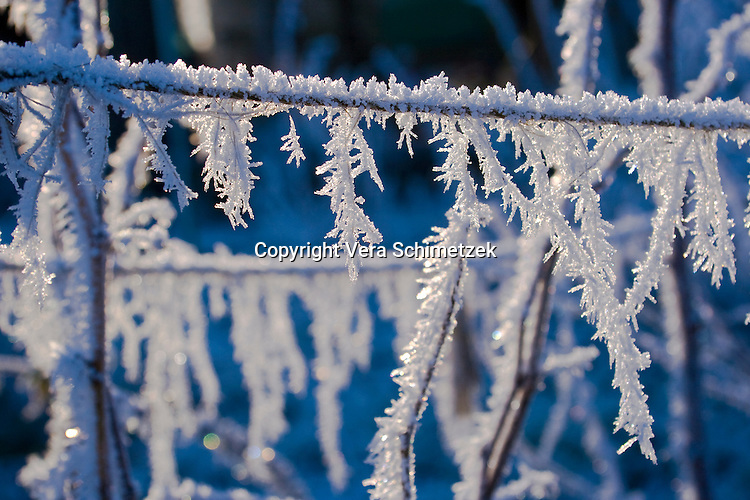 Europe, DEU, Germany, North Rhine-Westphalia, frosted plants....Europa, DEU, Deutschland, Nordrhein-Westfalen, mit Raureif bedeckte Pflanzen......[Copyright / Contact: Vera Schimetzek, Bornstrasse 5, 58300 Wetter, Germany, cell: 0049.(0)151.21220918, schimetzek@web.de, www.schimetzek-foto.de, publication is subject to a fee and report, the General Terms and Conditions apply. Die Veroeffentlichung ist melde- und honorarpflichtig, die AGB sind bindend.]