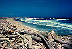 Drift wood and flotsam covering the beach, Aruba, Netherland Antillies,Caribbean