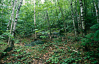 TREES - PLANTS<br />