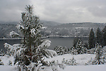 Freshly snowed on Pine tree high above Lake Coeur D Alene, Idaho