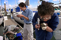 Gretchen Lambert, University of Washington Friday Harbor Laboratory (rt) studies a sample she collected on a marina. Andy Cohen, San Francisco Estuary Institute and Leslie Harris, <br /> Natural History Museum of Los Angeles County inspect their finds from San Francisco Bay waters. <br /> <br /> Scientists collect samples before taking them to a lab in San Francisco Bay, THE most impacted ecosystem in the world. Since 1970, on average, one new species has been introduced every 24 weeks into the bay and surrounding estuaries. According to Dr. Andrew Cohen of the San Francisco Bay Estuary Institute, the bay has over 240 invasive species. Dr Cohen sounded the alarm about the increasing impact of foreign species beginning with the Chinese mitten crab and European green crab. The mitten crab is responsible for horrific erosion problems while the green crab out competes the native Dungeness crab for resources. <br /> <br /> Most of the fish found in the Bay's delta are non-native. All of these non-indigenous species have had a profound impact on the ecology of San Francisco Bay. <br /> Ballast water moved from port to port also spreads human pathogens--there is evidence that cholera bacteria that returned to Peru in 199 was the first outbreak in the Western Hemisphere in a century. It was brought by ships from Asia in ballast water.