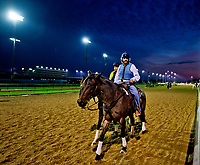 LOUISVILLE, KENTUCKY - APRIL 30: Trainer Steve Asmussen escorts a horse during Kentucky Derby and Oaks preparations at Churchill Downs on April 30, 2017 in Louisville, Kentucky. (Photo by Scott Serio/Eclipse Sportswire/Getty Images)
