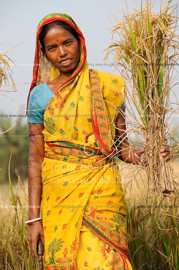 INDIA West Bengal, Dalit woman harvest rice for community rice bank in village Kustora / INDIEN Westbengalen , Dorf Kustora , Reisernte , Dalit Frauen betreiben gemeinsam eine Reisbank zur Ueberbrueckung von Ernteausfaellen und bei Nahrungsverknappung , gefoerdert durch LWS Indien, Frau Parul