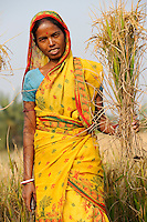 INDIA West Bengal, Dalit woman harvest rice for community rice bank in village Kustora / INDIEN Westbengalen , Dorf Kustora , Reisernte , Dalit Frauen betreiben gemeinsam eine Reisbank zur Ueberbrueckung von Ernteausfaellen und bei Nahrungsverknappung , gefoerdert durch LWS Indien, Frau Parul