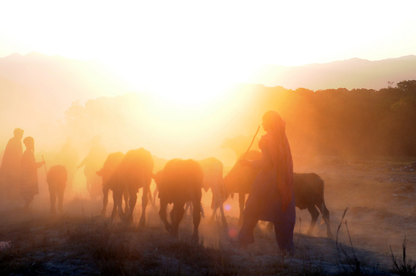 Moving along the Yamuna at sunrise.
