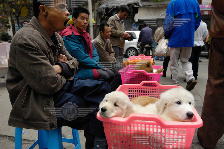 Puppies for sale at at a street corner close to where dogs used to be sold for food in Qingping Market. Pets are becoming more and more popular amongst China's middle class.