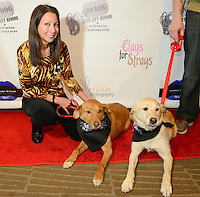 PHILADELPHIA, PA -  FEBRUARY  22: No Dog Gets Left Behind War Torn Pups benefit at the Double Tree Hotel February 22, 2014 in Philadelphia, Pennsylvania.  (Photo by William Thomas Cain/Cain Images)