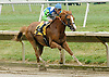 Holy Ground (Barbaro's older 1/2 brother) winning The Stanton Stakes on 8/27/05 at Delaware Park