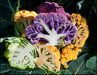 BNPS.co.uk (01202 558833)<br /> Picture: PhilYeomans/BNPS<br /> <br /> The Vitaverde, Ortoli and Grafitti cauliflowers.<br /> <br /> A farmer has launched a campaign to get more vegetables onto people's plates - by turning the common cauliflower bright shades of purple, green and orange.<br /> <br /> The 'rainbow' caulis are part of Andrew Burgess' masterplan to improve the diets of Brits by making vegetables more mouth-watering.<br /> <br /> Andrew hopes the colourful cauliflowers could reinvigorate the nation's love for vegetables - and also attract a new legion of fans.