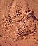 USA, Arizona, Wind Blown twig in Paria Canyon