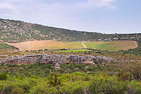 Domaine d'Aupilhac. Montpeyroux. Languedoc. Garrigue undergrowth vegetation with bushes and herbs. Les Cocalieres recently planted magnificent vineyard plot on the hill slope. France. Europe. Vineyard.