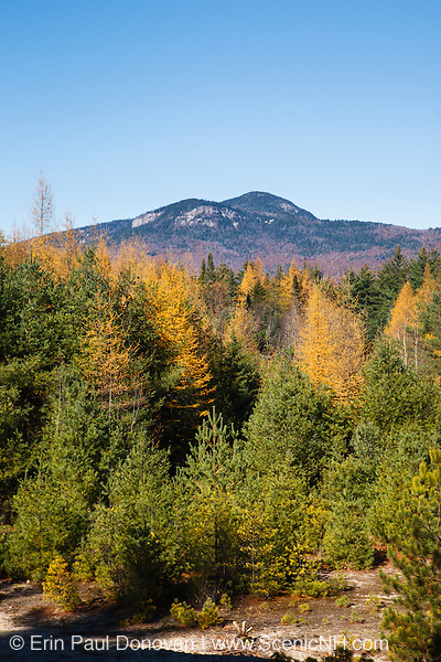 Autumn foliage along the Kancamagus Highway (route 112), which is one of New England's scenic byways. Located in the White Mountains, New Hampshire USA. This area was part of the Swift River Logging Railroad. This was an logging railroad in operation from 1906 - 1916.