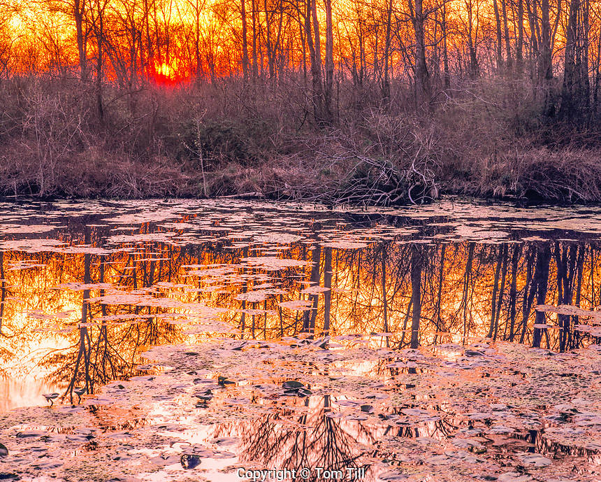 Great Swamp Sunset, Great Swamp National Wildlife Refuge,  New Jersey