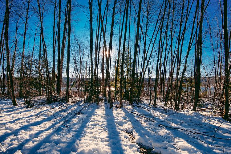 Trees beside lake in winter