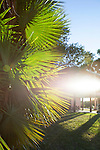 Late afternoon sun shines on palm leaves at the  Flamingo Visitor Center, Everglades National Park, Florida, USA