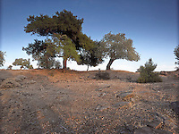 OR_LOCATION_45184