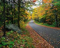 USA, New York, Autumn colored trees line road near Fourth Lake in the Adirondak Mountains