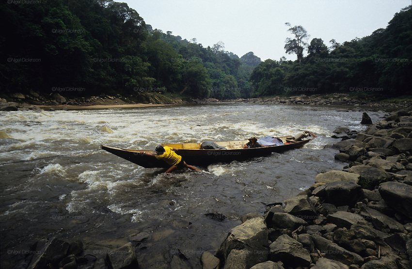 1991: Kenyah native headman/chief, Nelson, pulls his longboat upriver through rapids as he approaches Long Geng. Sarawak, Borneo<br />