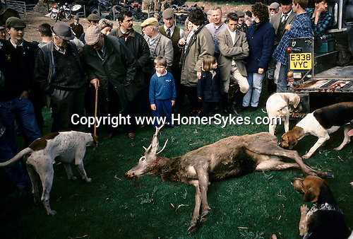 'QUANTOCK STAG HOUNDS', QUANTOCK, SOUTH SOMERSET. THE STAG IS ABOUT TO BE GUTTED FOR THE HOUNDS TO EAT, 1997