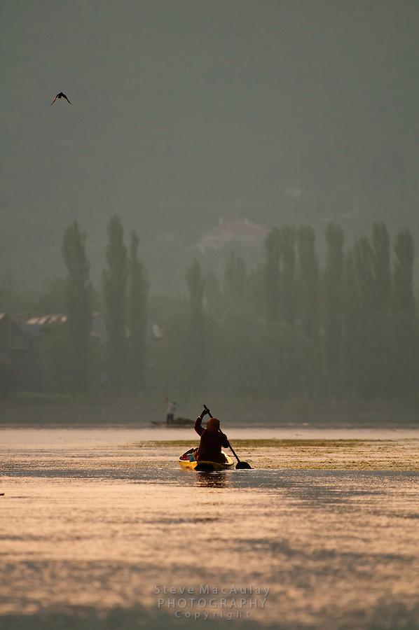 Woman paddling a traditional Kashmiri shikara, or gondola, Dal Lake, Srinagar, Kashmir, india..