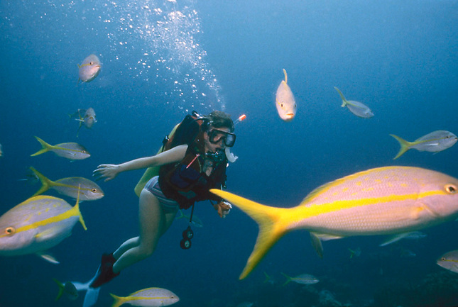 Woman diver swimming with a school of Yellow Tails