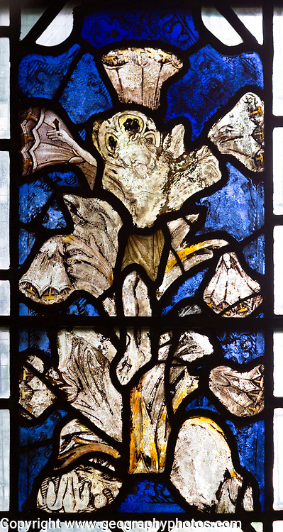 Medieval stained glass window of Jesus Christ crucified in shape of lily flower, Holy Trinity church, Long Melford, Suffolk, England circa 1350.