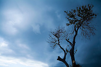 Branches of a tree silhouetted against a stormy sky, Cuba.