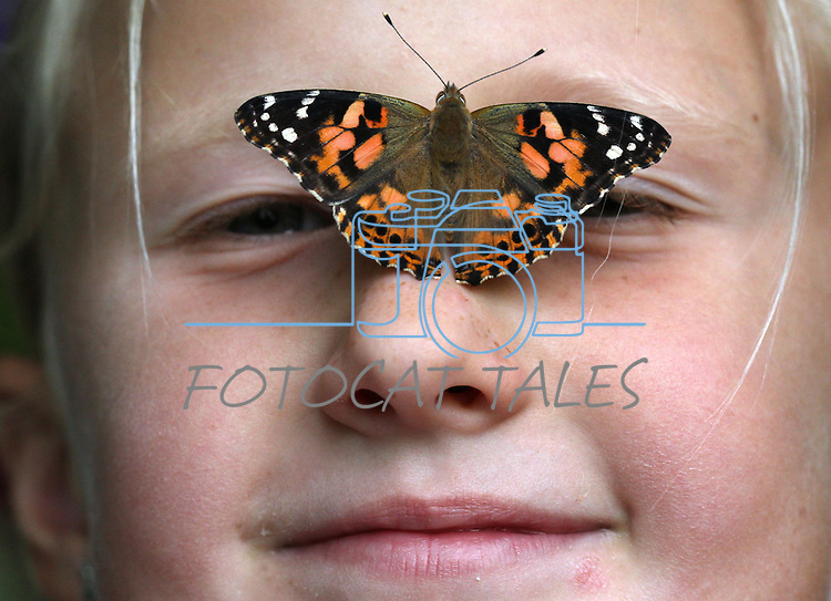 A painted lady butterfly shortly after hatching in Gardnerville, Nev., on Saturday, Sept. 24, 2011..Photo by Cathleen Allison