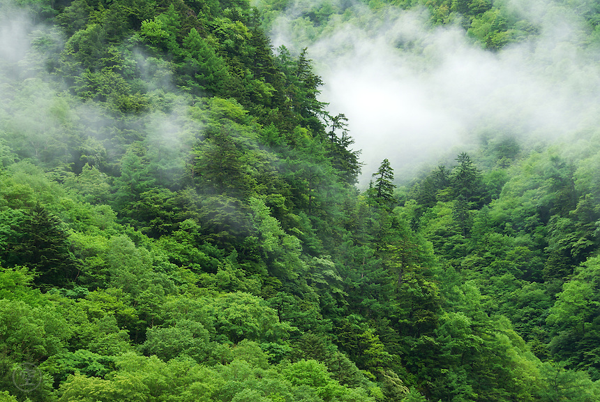 Forested mountainside in rainy season clouds, Kamikochi, Nagano, Japan.