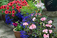 Annual flowers in pots in bloom in summer