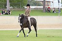 Hunter Pony Gelding NE 12.2hh