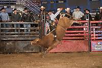 SEBRA - Beckley, WV - 1.18.2014 - Bulls & Action