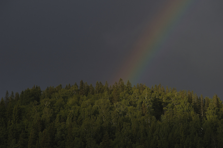 Rainbow over forest Landscape, landskap,