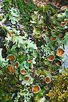 Lichen in Rainforest