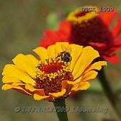 Gisela, FLOWERS, BLUMEN, FLORES, photos+++++,DTGK1909,#f#