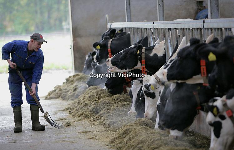 Foto: VidiPhoto..RHENEN - De melkkoeien van veehouder Van de Scheur uit Rhenen aan het voerhek.