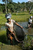 West Africa, Liberia, Kpelle tribe. Women fishing with hand nets in shallow stream.