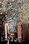 Seattle, Pike Place Market, Post alley, cherry tree in bloom, Pike Place Farmers Market Historical District, Washington state, Pacific Northwest, .