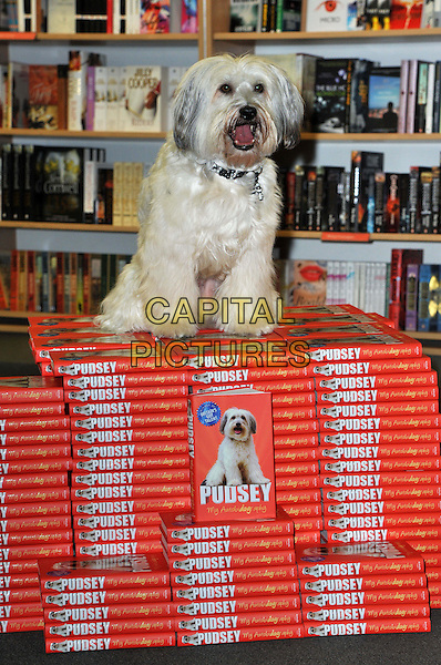 Pudsey the dog.launch 'Pudsey My Autobidography' at Foyles bookshop, Charing Cross Road, London, England..10th October 2012.book books stripe dog animal .CAP/BF.©Bob Fidgeon/Capital Pictures.