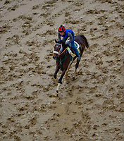 BALTIMORE, MD - MAY 16: Bravazo jogs in preparation for the Preakness at Pimlico Race Course on May 15, 2018 in Baltimore, Maryland (Photo by Scott Serio/Eclipse Sportswire/Getty Images)