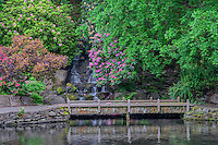 ORPTC_D170 - USA, Oregon, Portland, Crystal Springs Rhododendron Garden, Rhododendrons bloom near waterfall and Crystal Springs Lake.