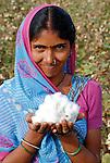 INDIA Madhya Pradesh , organic cotton project bioRe in Kasrawad , Adivasi woman harvest bio cotton by hand / INDIEN Madhya Pradesh , bioRe Projekt fuer biodynamischen Anbau von Baumwolle in Kasrawad, Adivasi Frauen ernten Baumwolle, Portraet einer Baumwollfarmerin