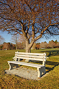 Empty bench next to tree at Great Island Common in New Castle, New Hampshire, USA during the spring months
